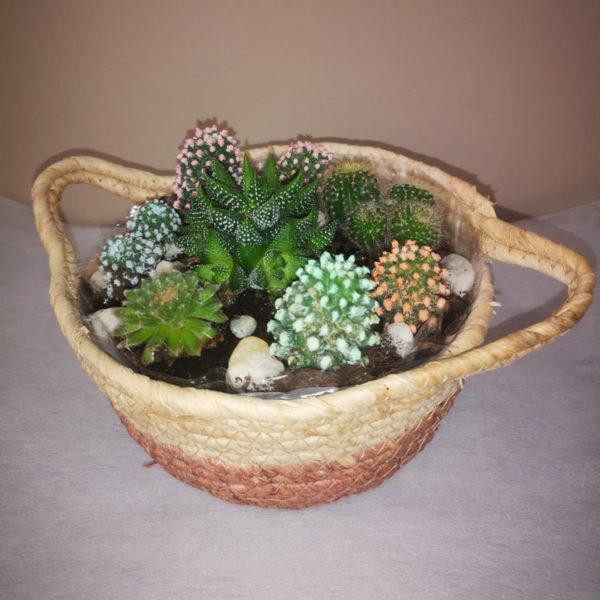 Pedro moreno Florista Arreglo Cactus