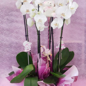 comprar orquídeas online