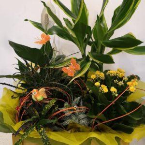 Pedro Moreno Florista Surtido flores amarillas